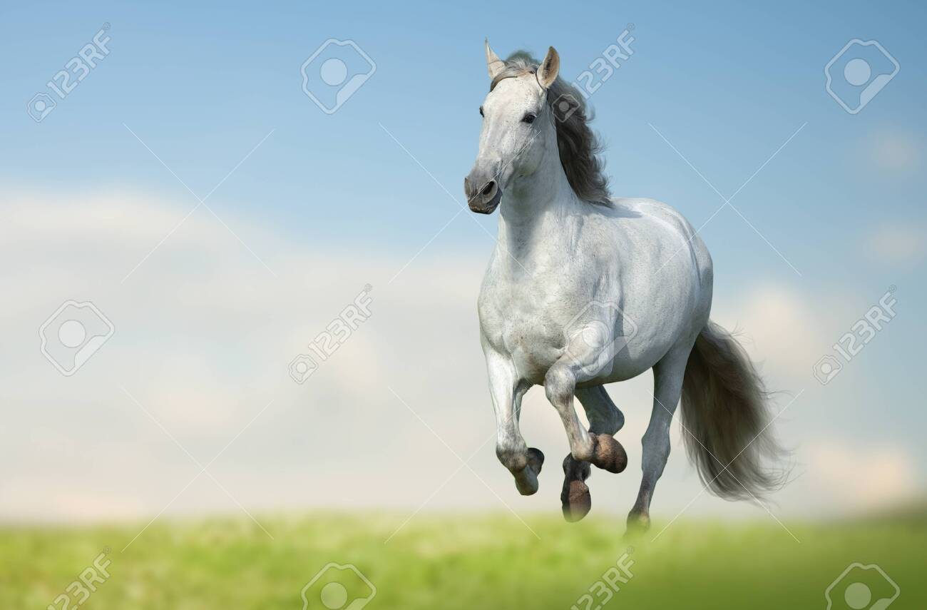 Beautiful Andalusian Horse Running Fast In The Field White Long Stock Photo Picture And Royalty Free Image Image 148722429
