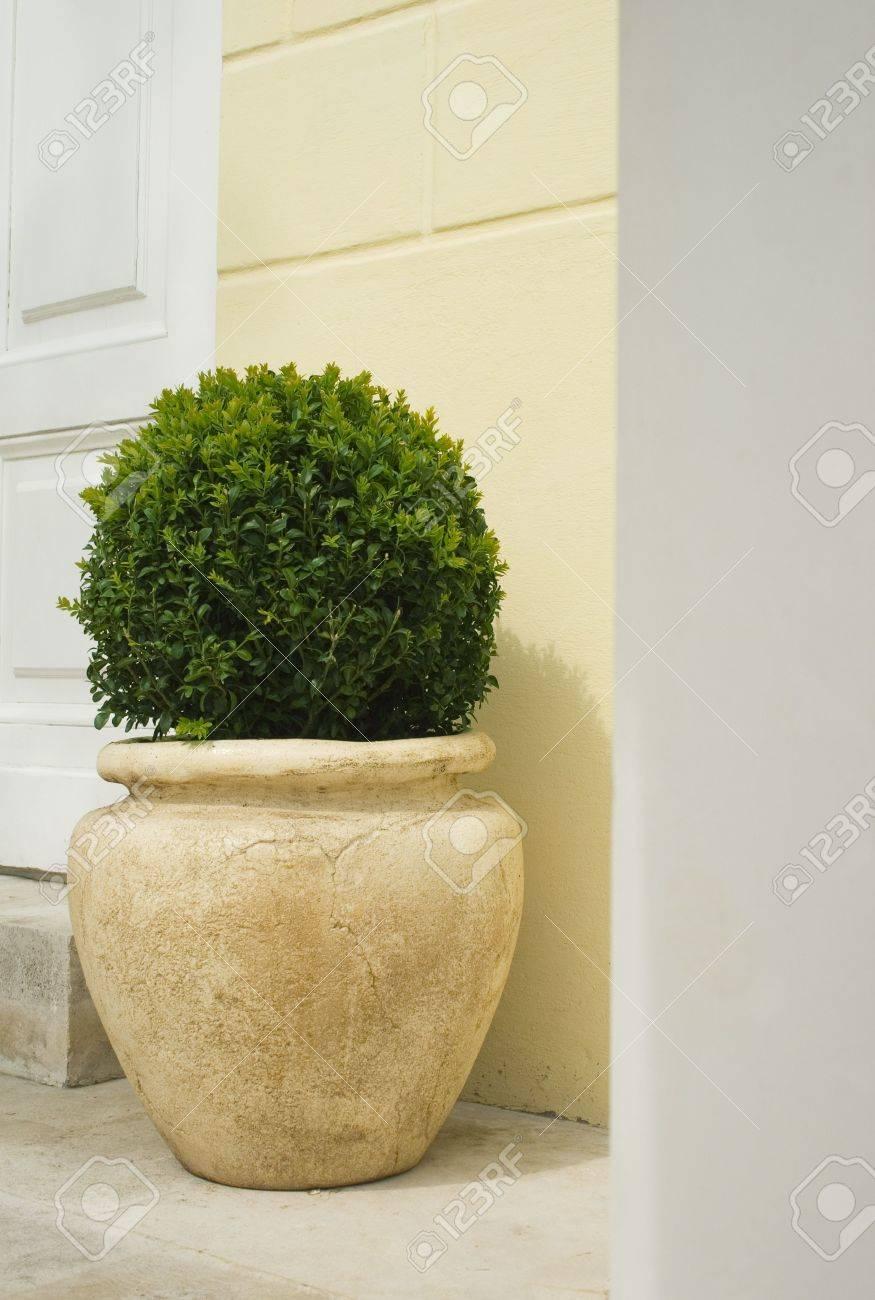 foto de archivo plante en macetas grandes de cermica sobre un fondo de pared - Macetas Grandes