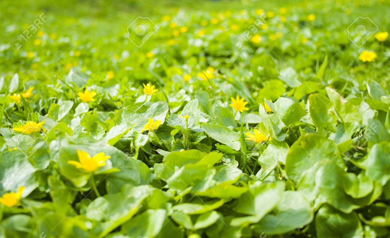 spring yellow flowers background Stock Photo - 2983007