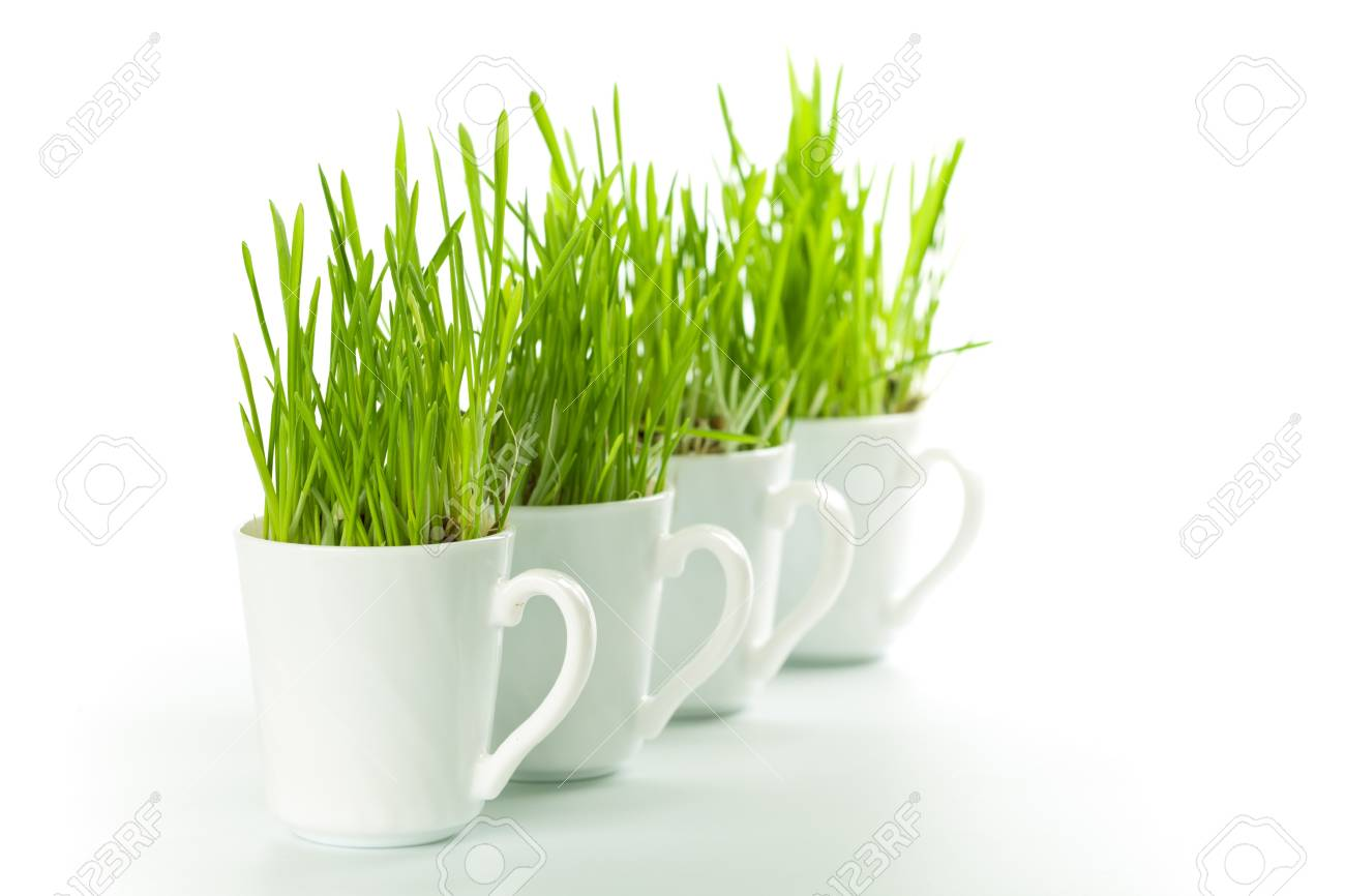 fresh green grass in coffee cups closeup on white background Stock Photo - 8889555