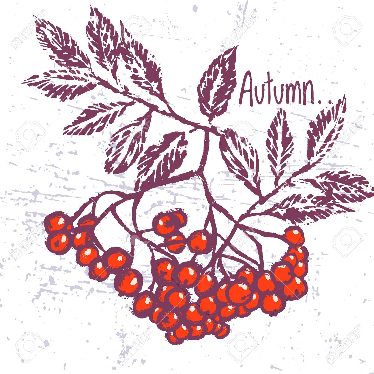 Vector background with rowan ornament - 65077788