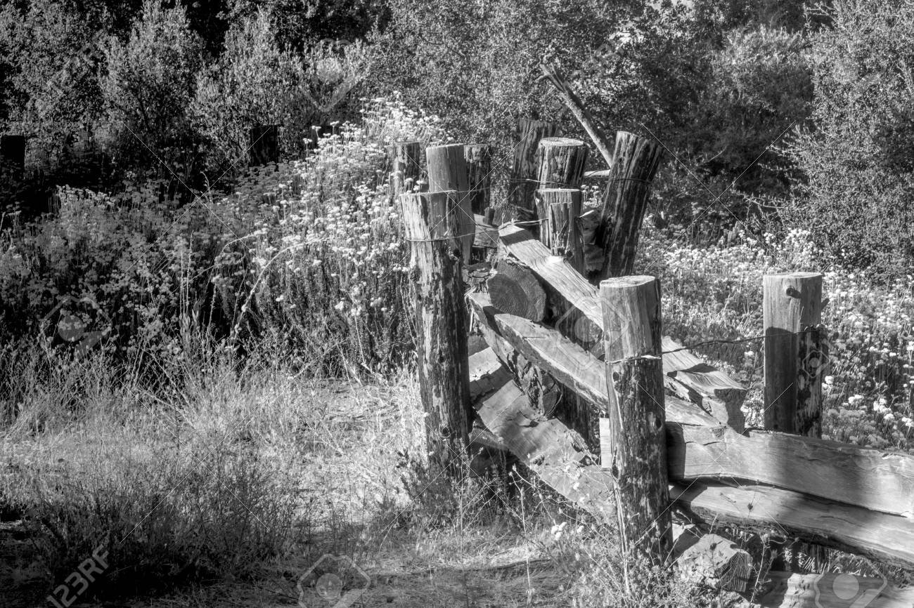 Black And White Of Old Wood And Barbed Wire Fencing In Forest ...