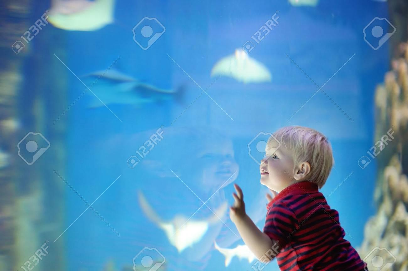 Toddler boy watches fishes in aquarium - 47403321