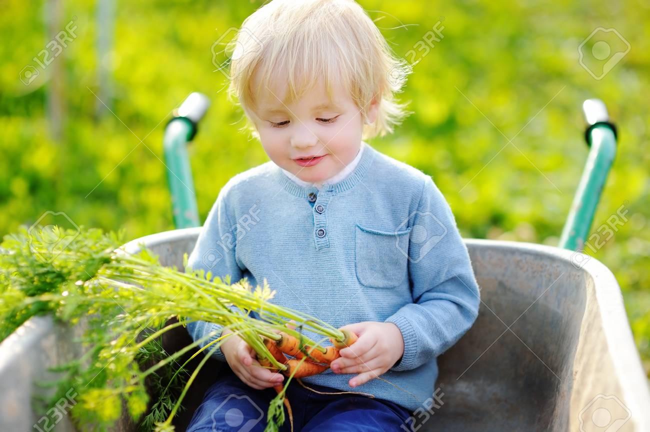 d151a59386bd Blonde toddler boy having fun in a wheelbarrow in domestic garden Stock  Photo - 74919059