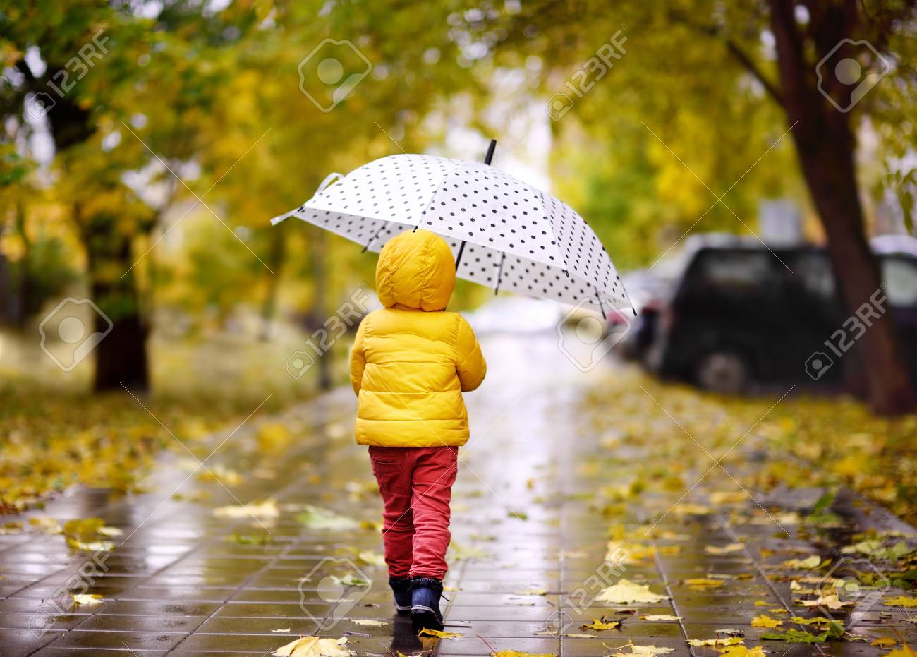 Little child walking in the city park at rainy autumn day. Toddler boy with umbrella for fall weather - 88132528