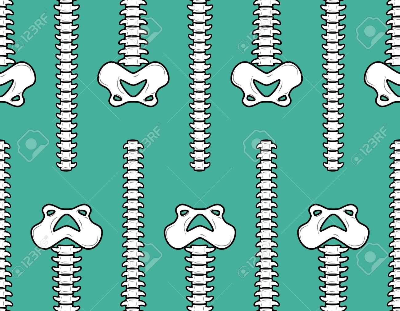 Spine And Pelvis Seamless Pattern. Bone Ornament. Medical Anatomy ...