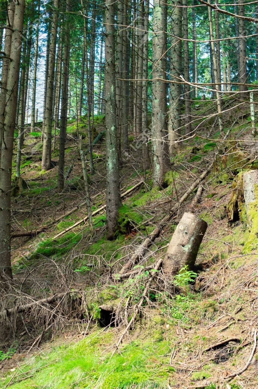 Tatra National park in Zakopane. Hiking trail in mountains. - 106023696