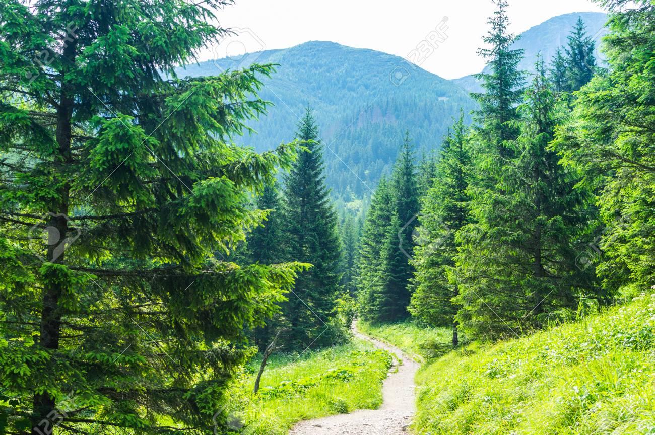 Hiking trail. Tourism in the mountains. Summer in Zakopane. - 106023710