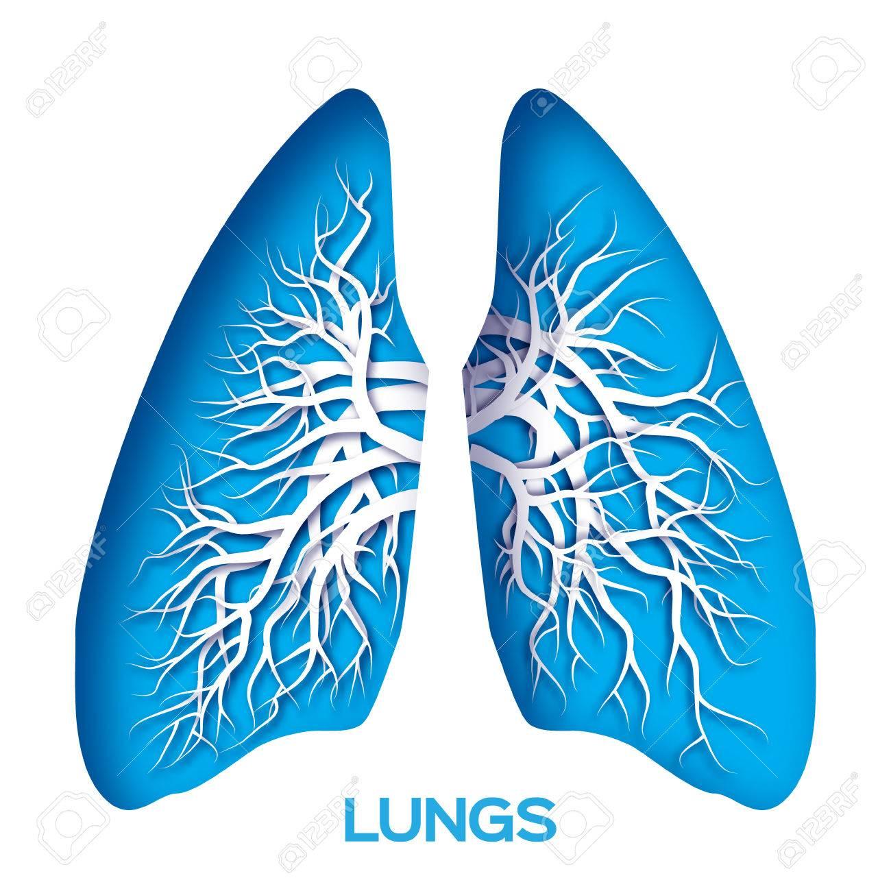 Origami Pulmones. Libro Azul Cortó Pulmones Humanos Anatomía Con El ...