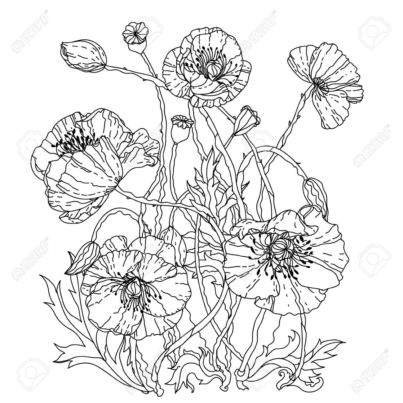 フィールド ポピーzenart スタイルの大人の塗り絵の春パターン
