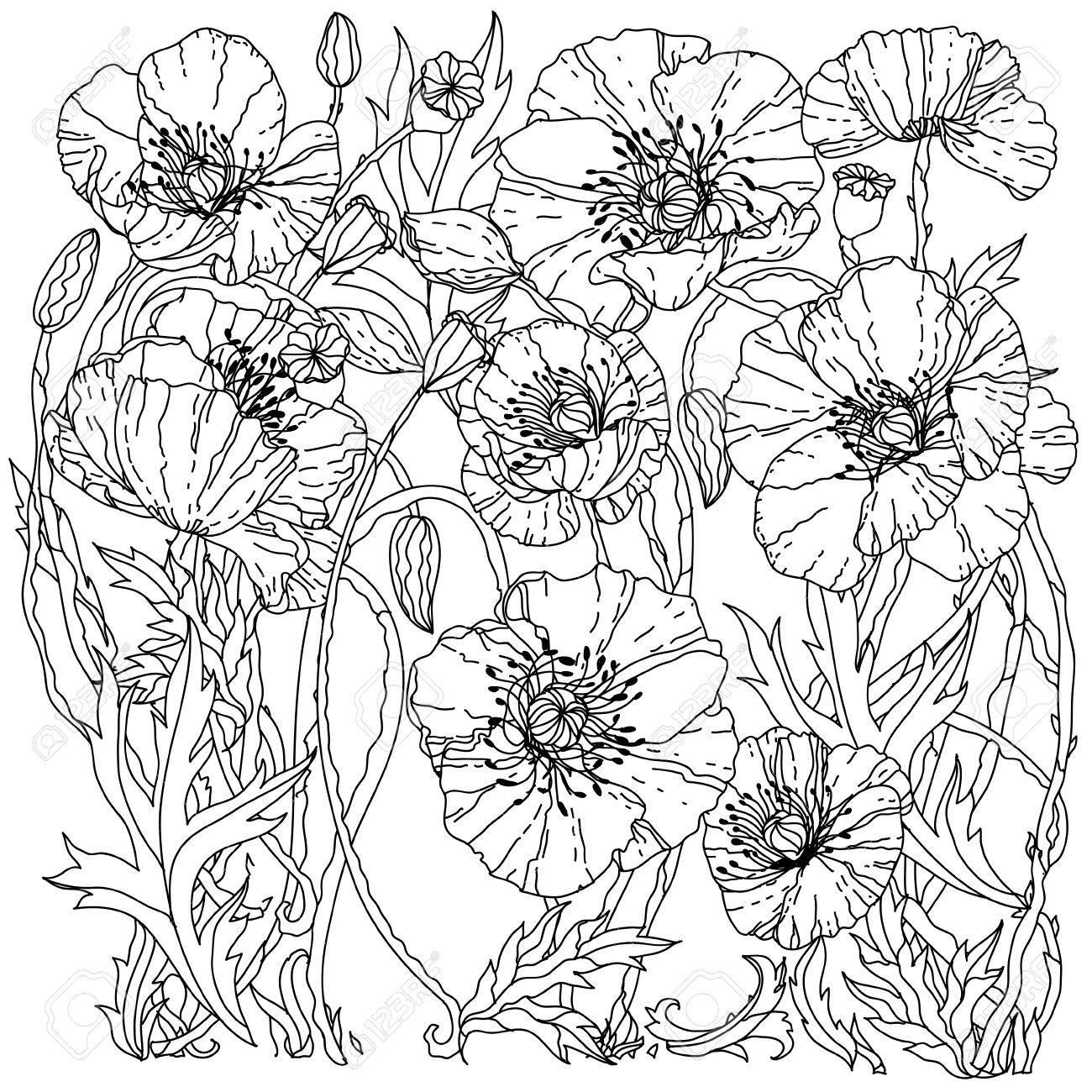 Amapolas De Campo Patrón De Primavera Para Colorear Libro Para Adultos En Estilo Zenart Dibujado A Mano Retro Vector Sin Colorear El Mejor Para