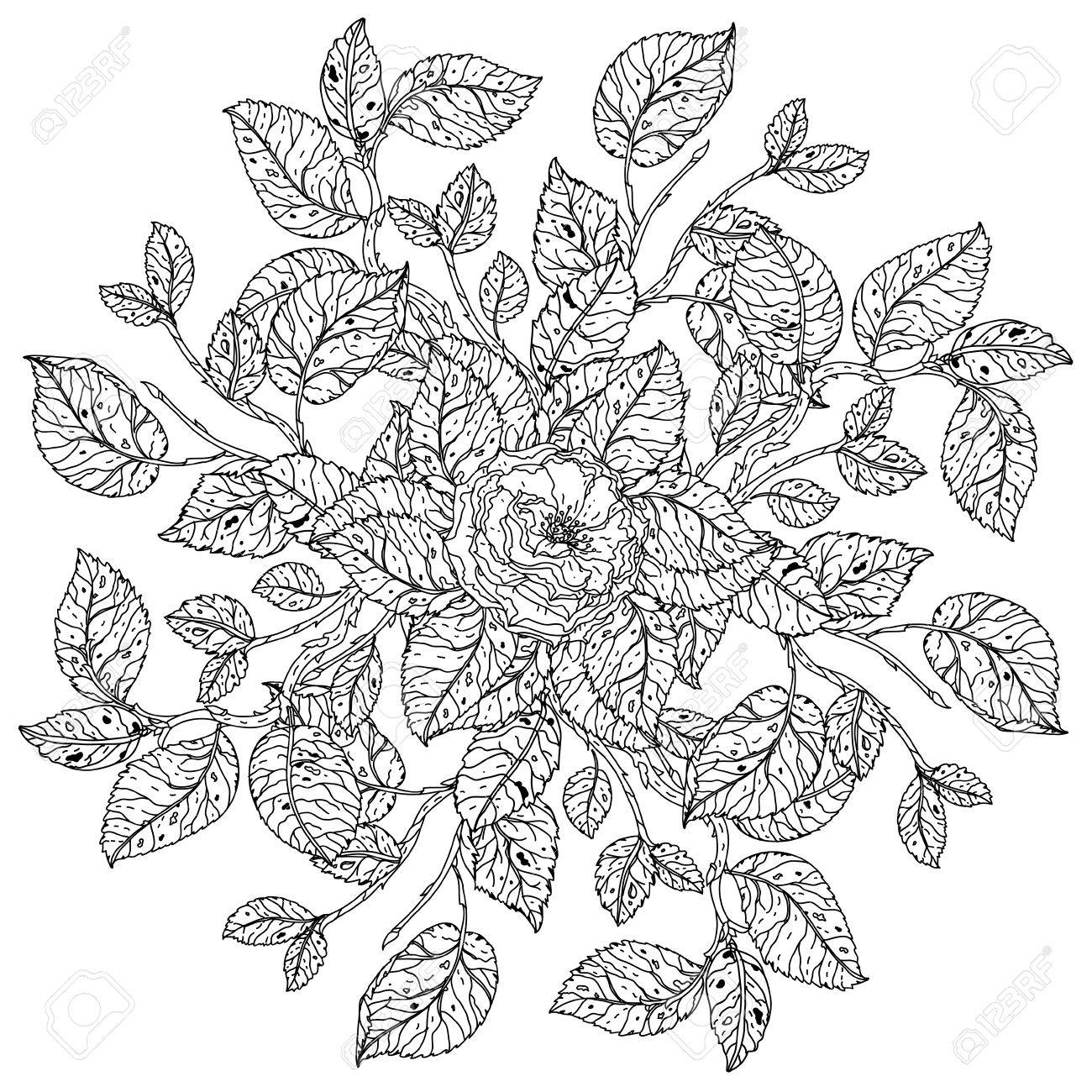 The coloring book poster - Vector Mandala Shaped Contoured Flowers Leaves Black And White For Coloring Book Or Poster Colouring Book Style Luxury Roses In Zenart Style