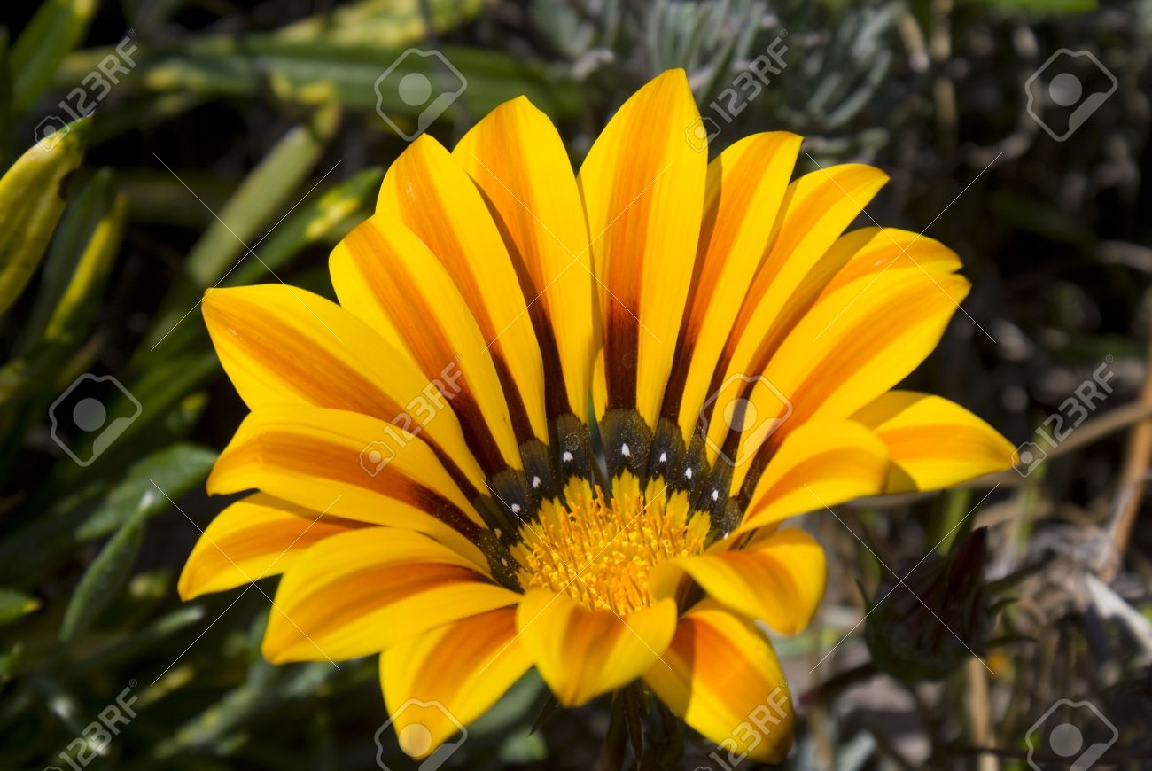 A closeup on a beautiful yellow and orange exotic flower stock photo a closeup on a beautiful yellow and orange exotic flower stock photo 6791619 mightylinksfo