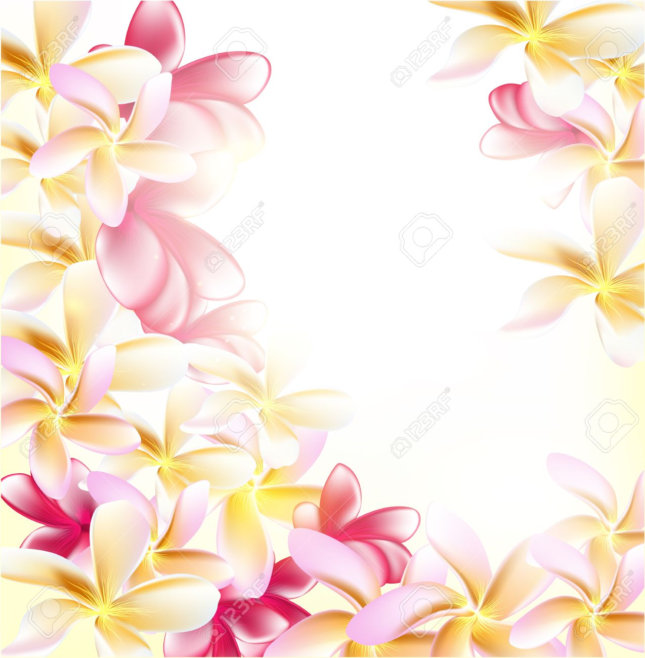 Pink Gardenia Flowers On White Background For Design Royalty Free