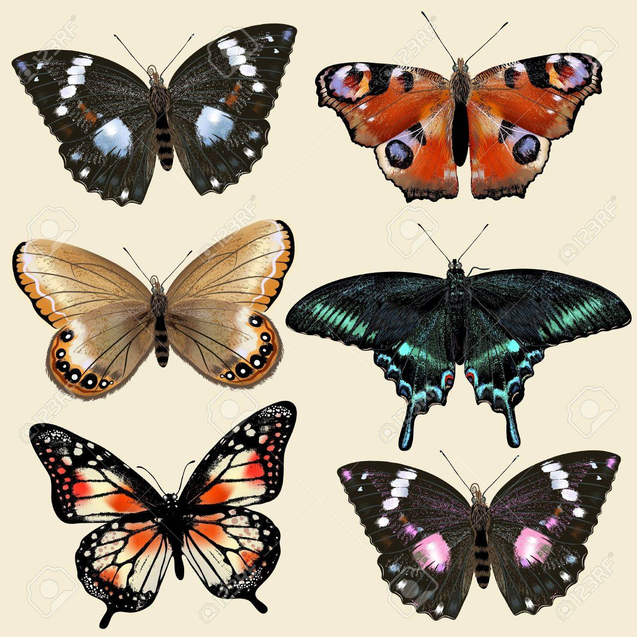Collection of vector colorful realistic butterflies for design Stock Vector - 21401929