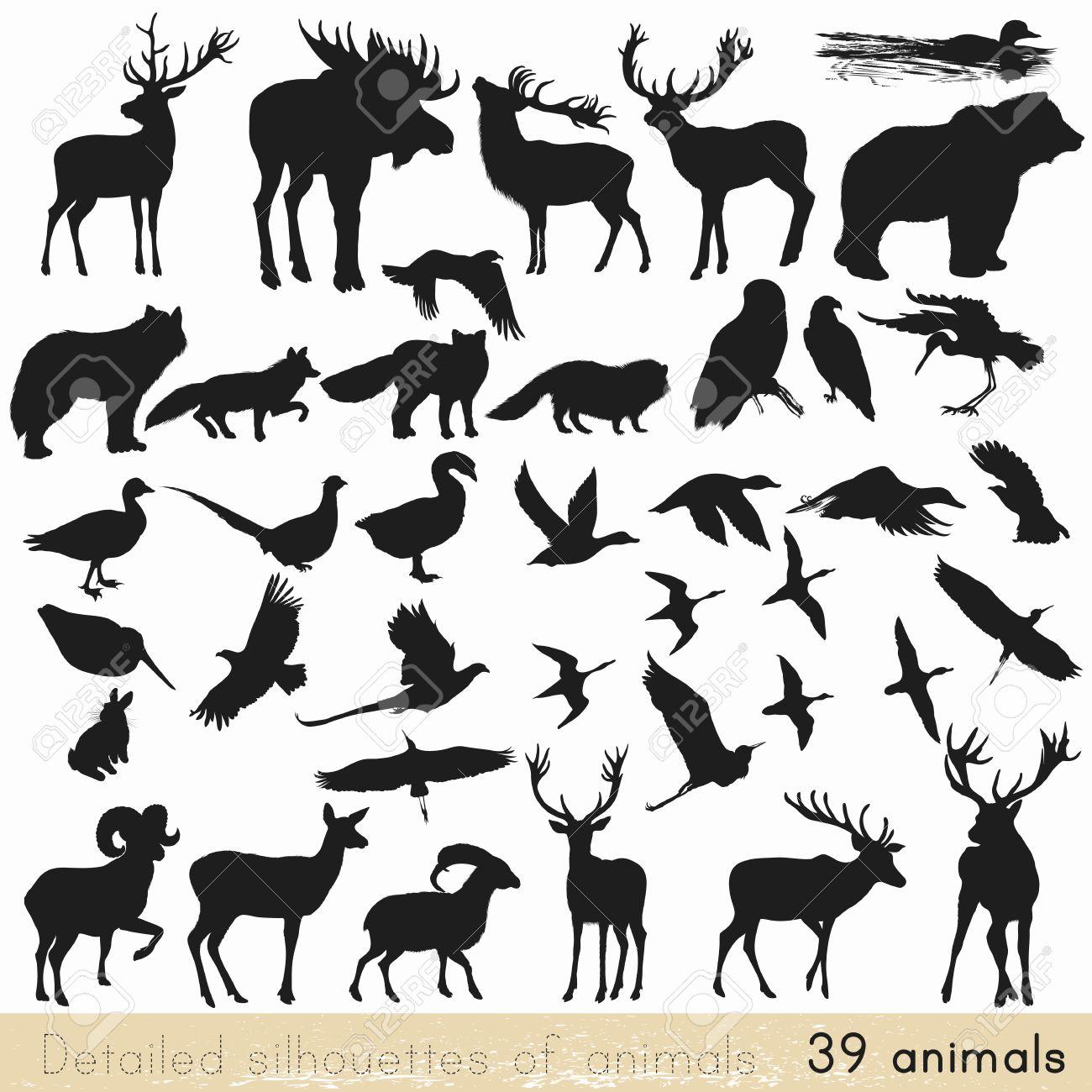 野生動物 ロイヤリティーフリーフォト、ピクチャー、画像、ストック