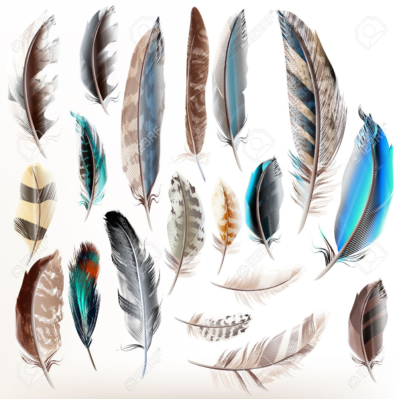 big set or collection of detailed bird feathers in realistic