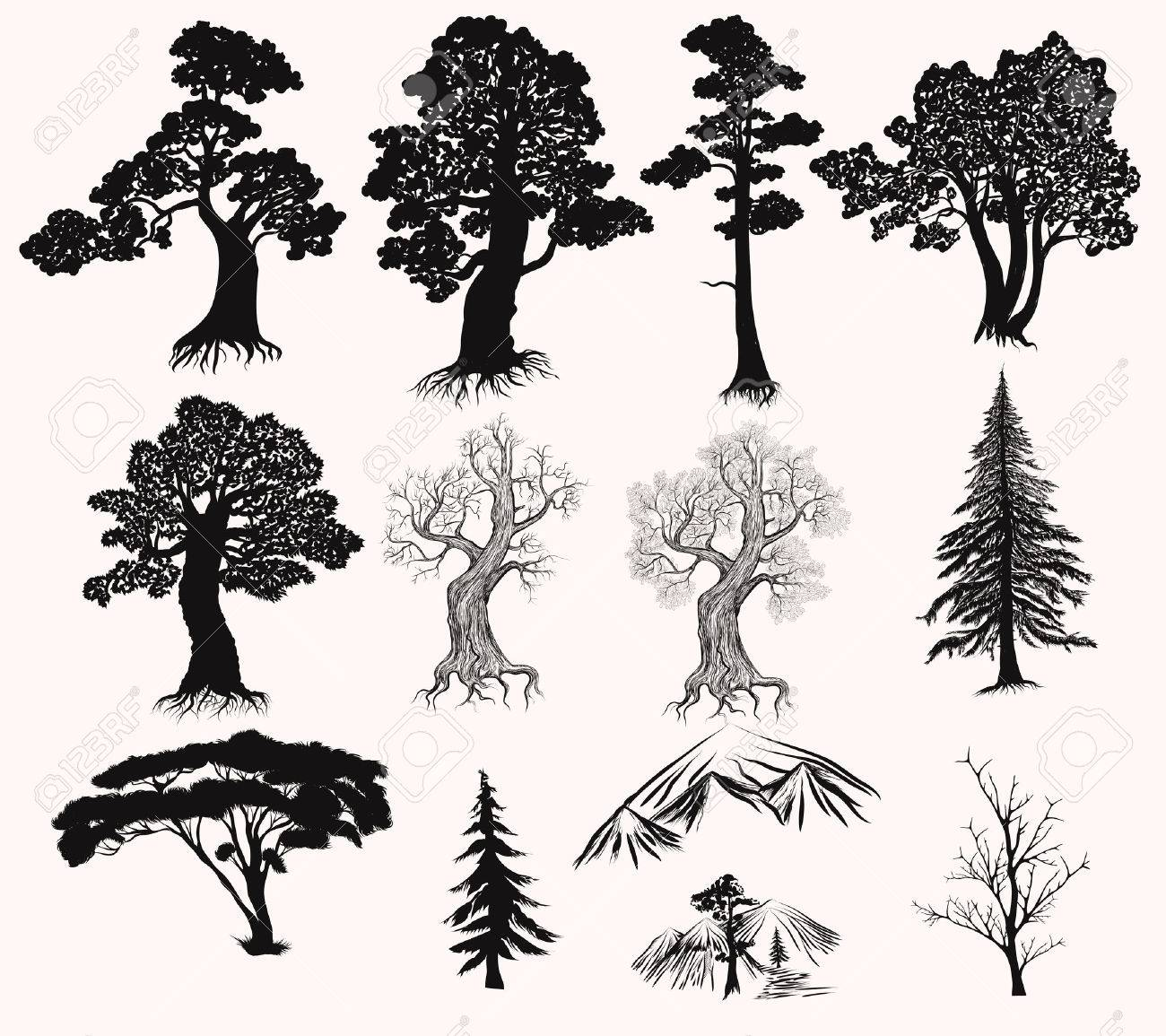 Collection or set of hand drawn detailed trees silhouettes oak pine fur tree and other - 51914809