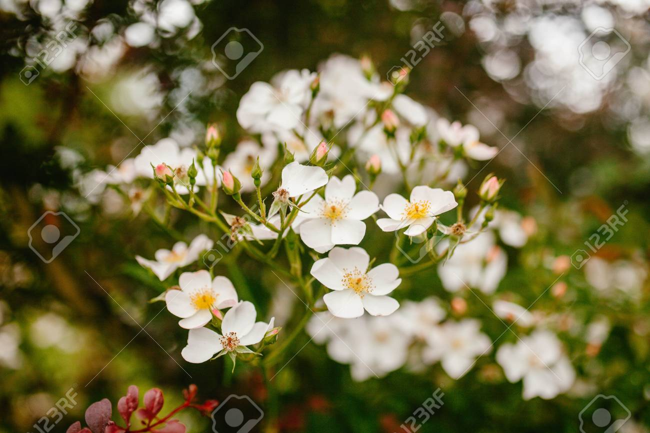 White Flowers Grow In The Grass Nature Stock Photo Picture And