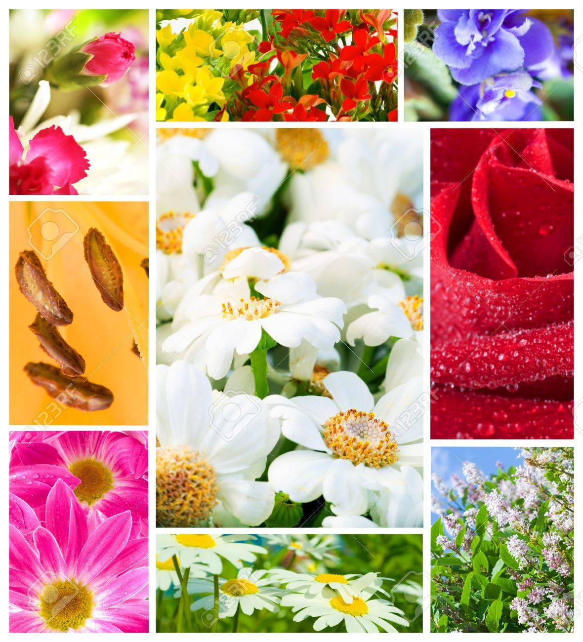 multi image Flowers Stock Photo - 3878922