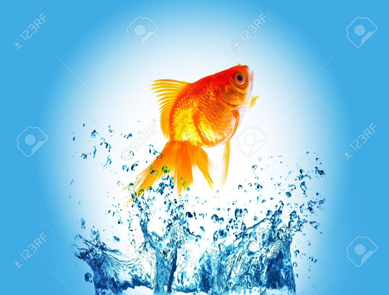 gold fish on water splash Stock Photo - 9294678