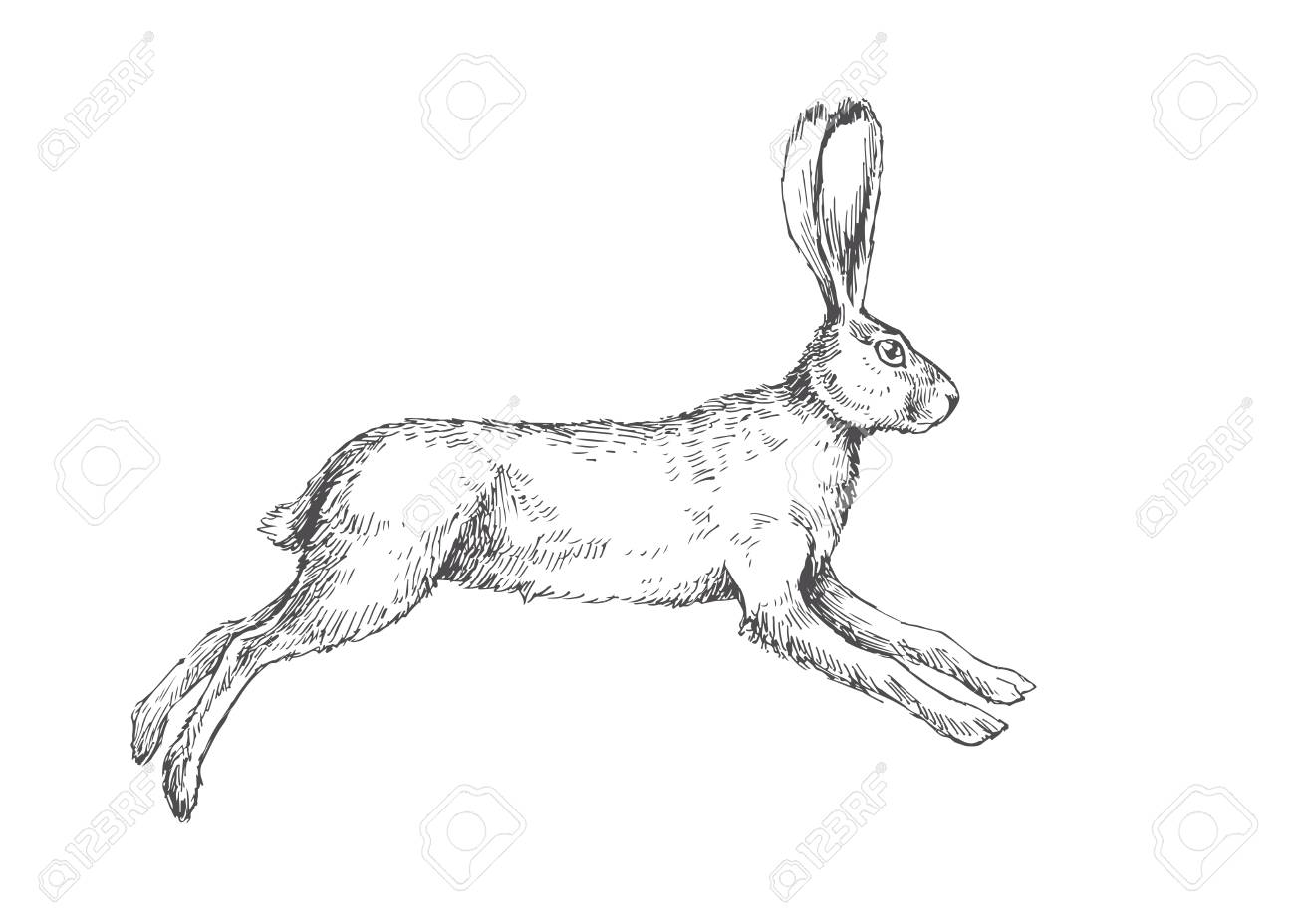 Vector vintage illustration of running hare isolated on white. Hand drawn jumping rabbit in engraving style. - 114935083