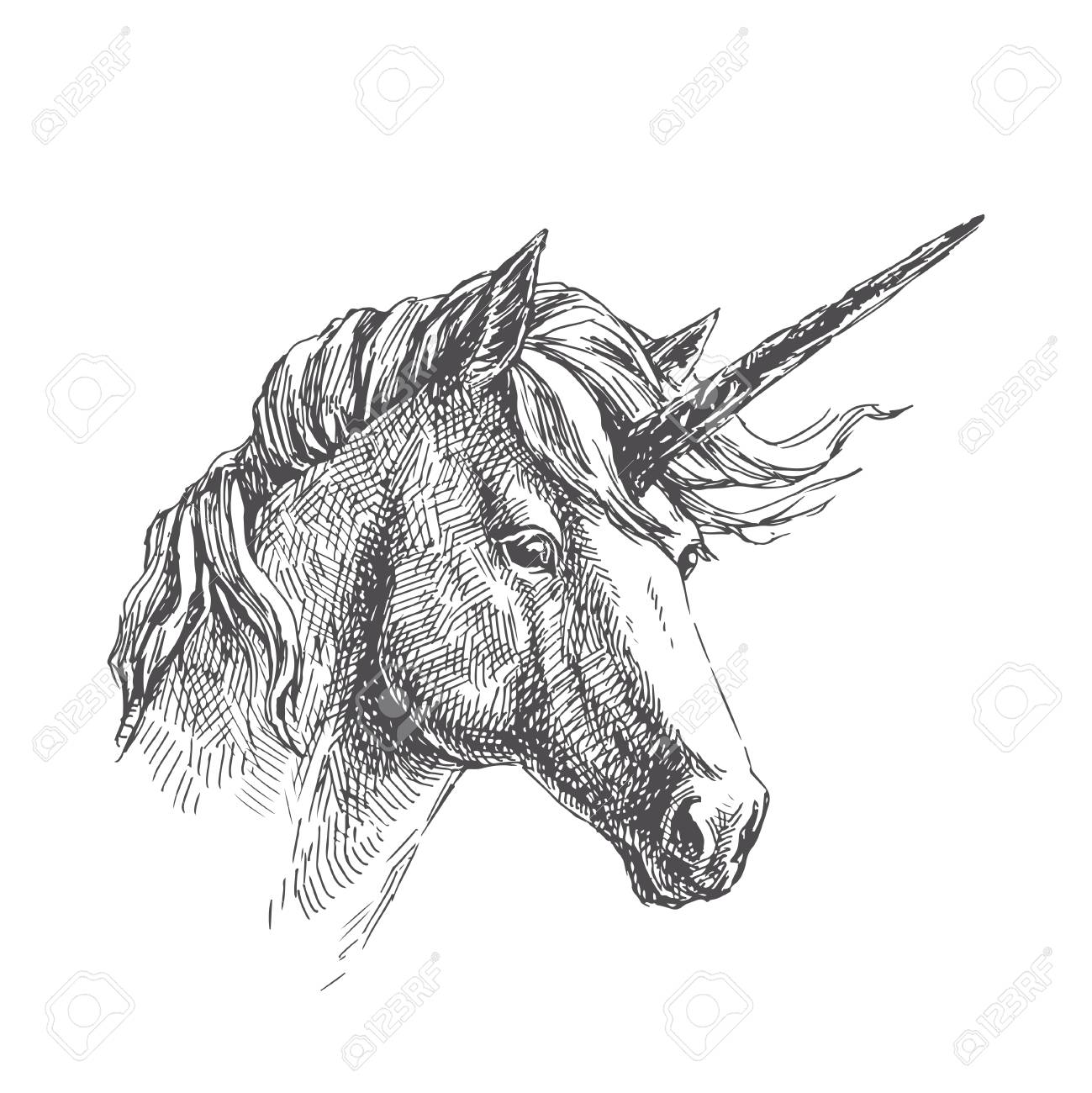 Vector vintage illustration of unicorn in engraving style. Hand..