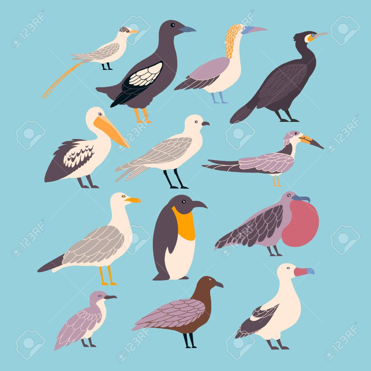 Vector set of seabirds in a flat style isolated on background. Atlantic seabirds - 144632588