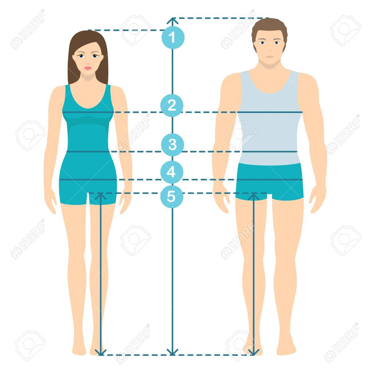 Vector illustration of man and women in full length with measurement lines of body parameters . Man and women sizes measurements. Human body measurements and proportions. Flat design. - 85933556