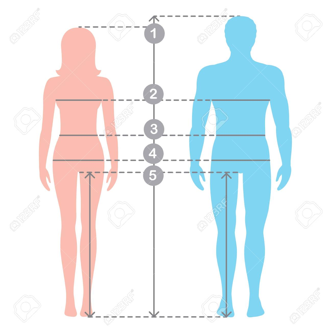 Silhuettes of man and women in full length with measurement lines of body parameters . Man and women sizes measurements. Stock vector cartoon illustration. Human body measurements and proportions. - 85933558