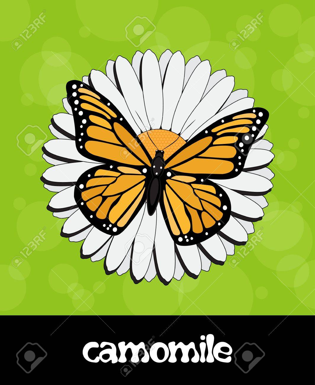 Vector summer background with flower and butterfly Stock Vector - 15604263