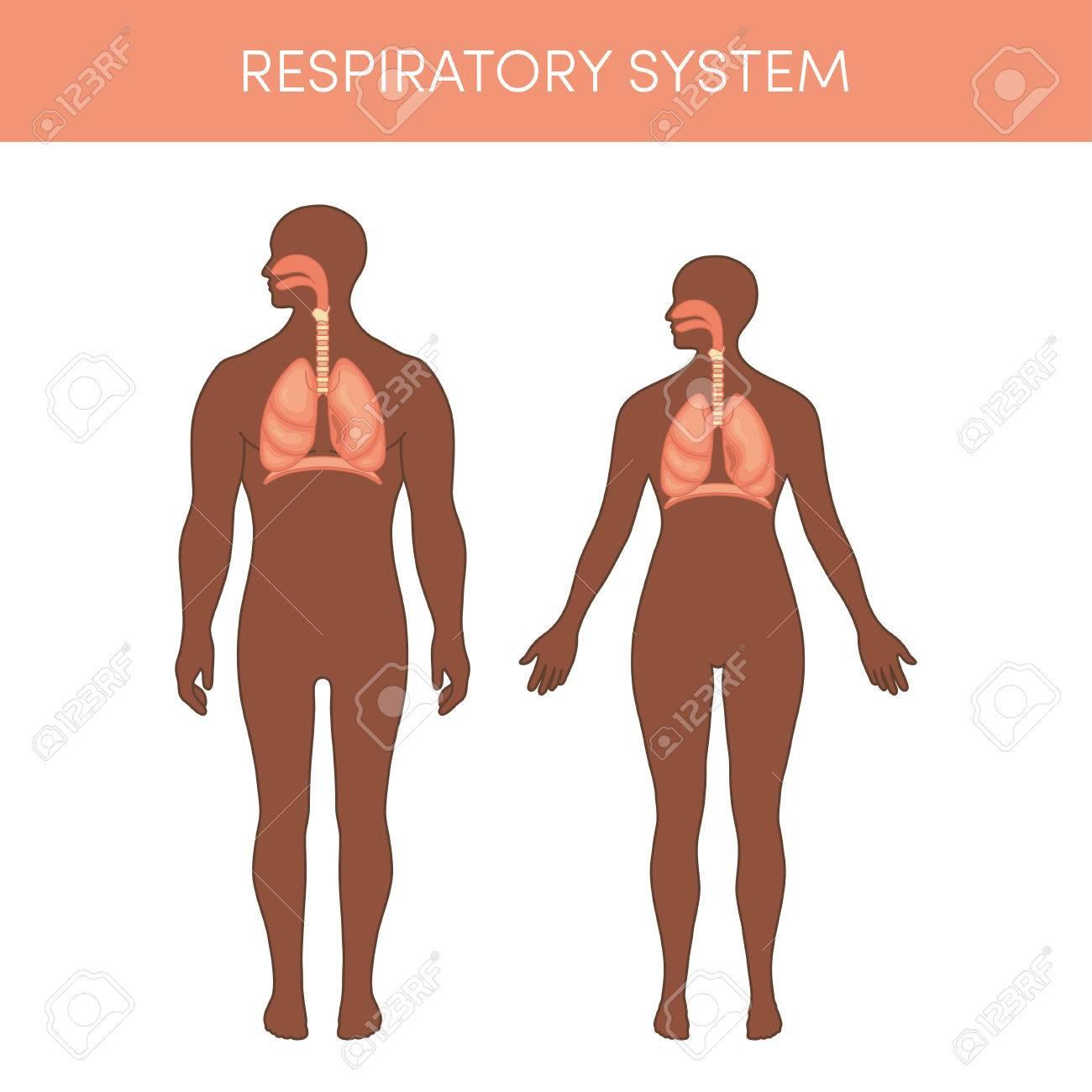 Atmungssystem Eines Menschen. Cartoon Vektor-Illustration Für ...