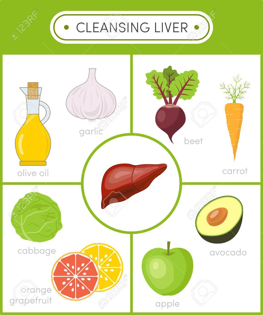 Konzept der gesunden Leber. Reinigung Lebensmittel für Leber. Satz von  Cartoon-Symbole für Infografiken