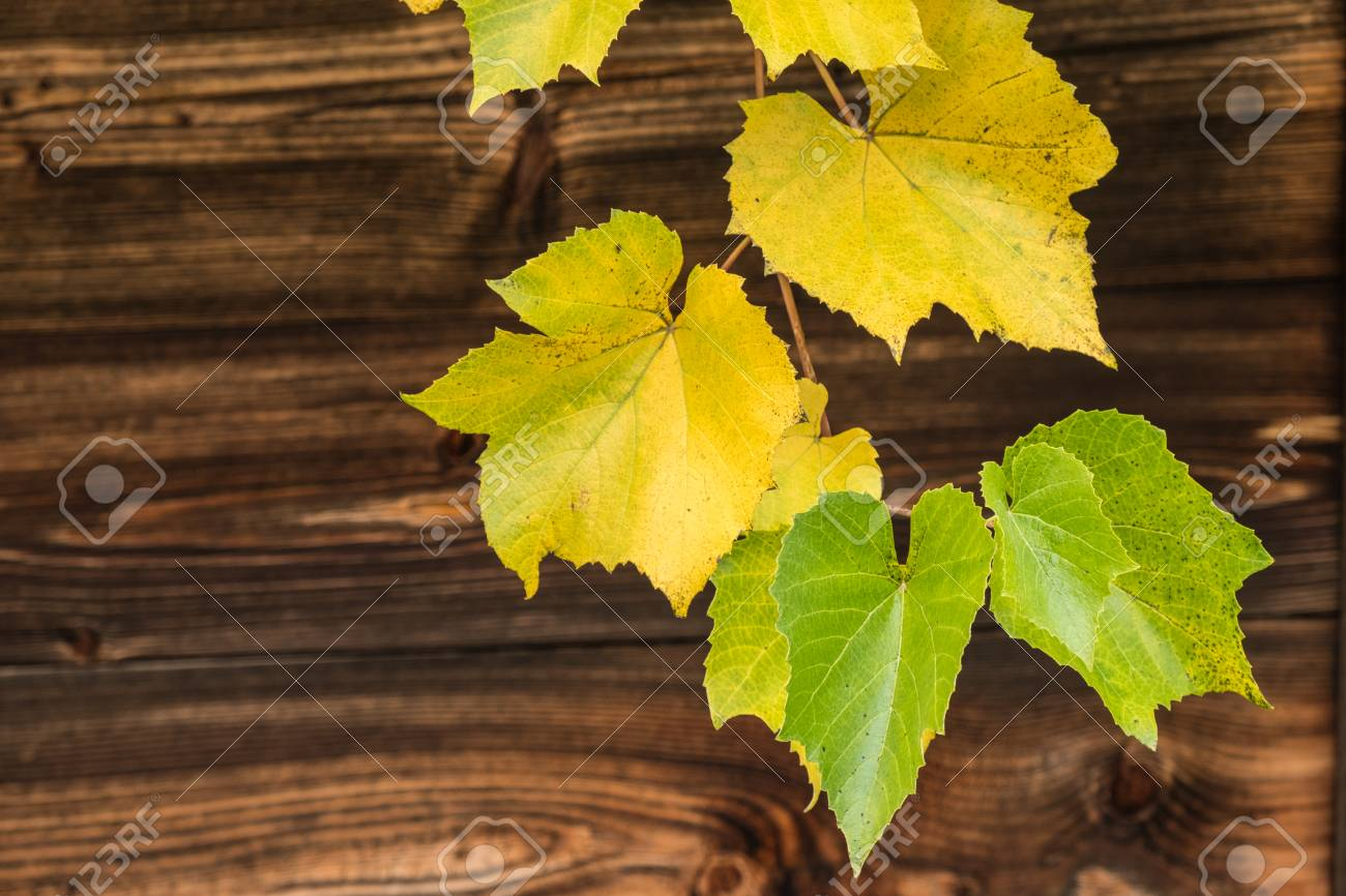 Weathered Timber Planks With Autumn Grape Vine Leaves Background Stock Photo Picture And Royalty Free Image Image 89710936