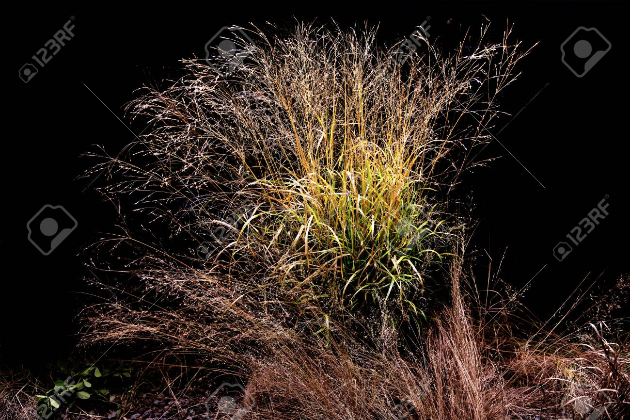 Plants At Night Stock Photo Picture And Royalty Free Image Image