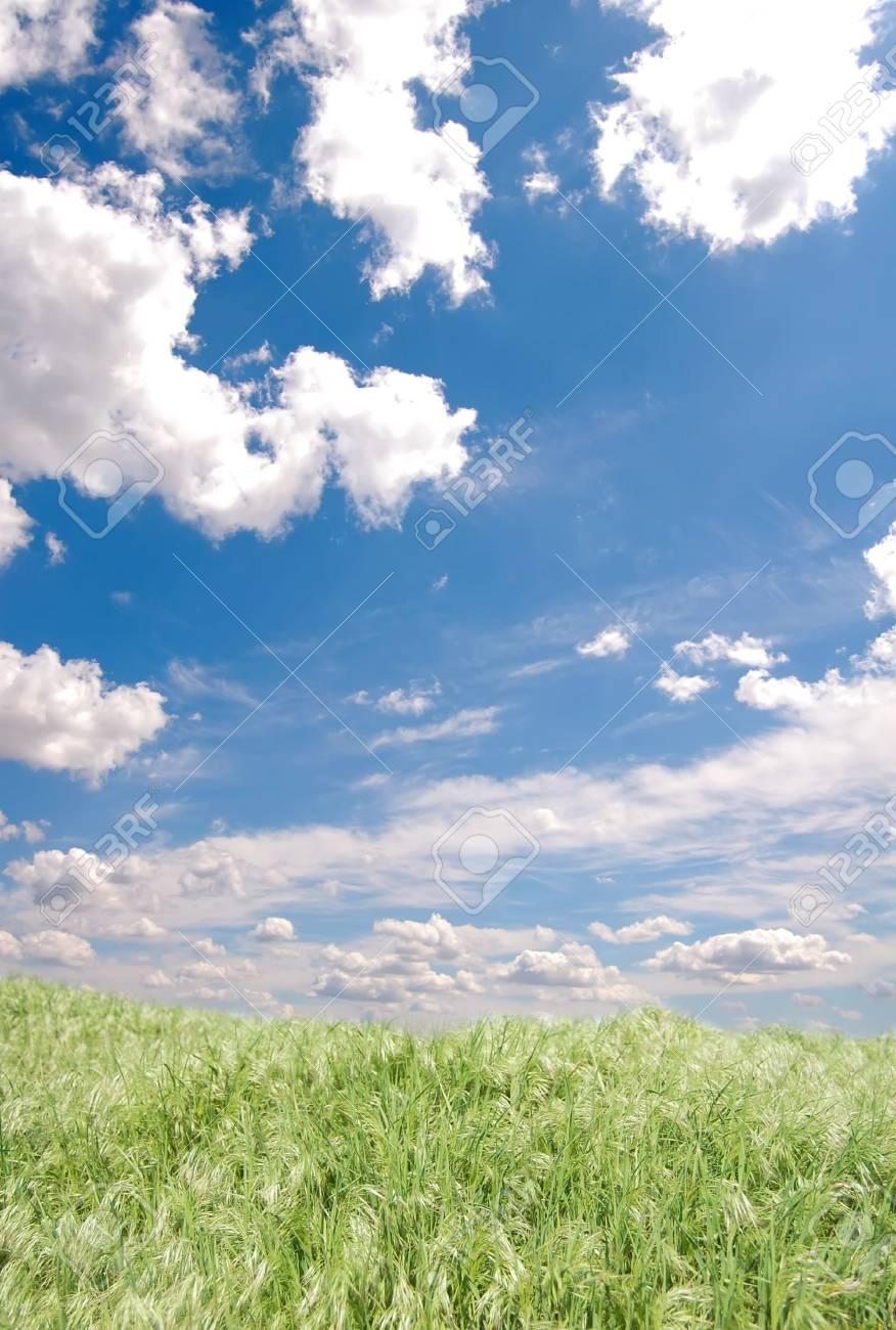 Green field Stock Photo - 5949373