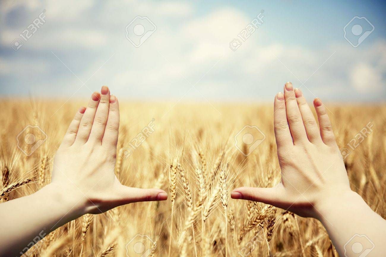 Hand's frame over the wheat field Stock Photo - 17235604