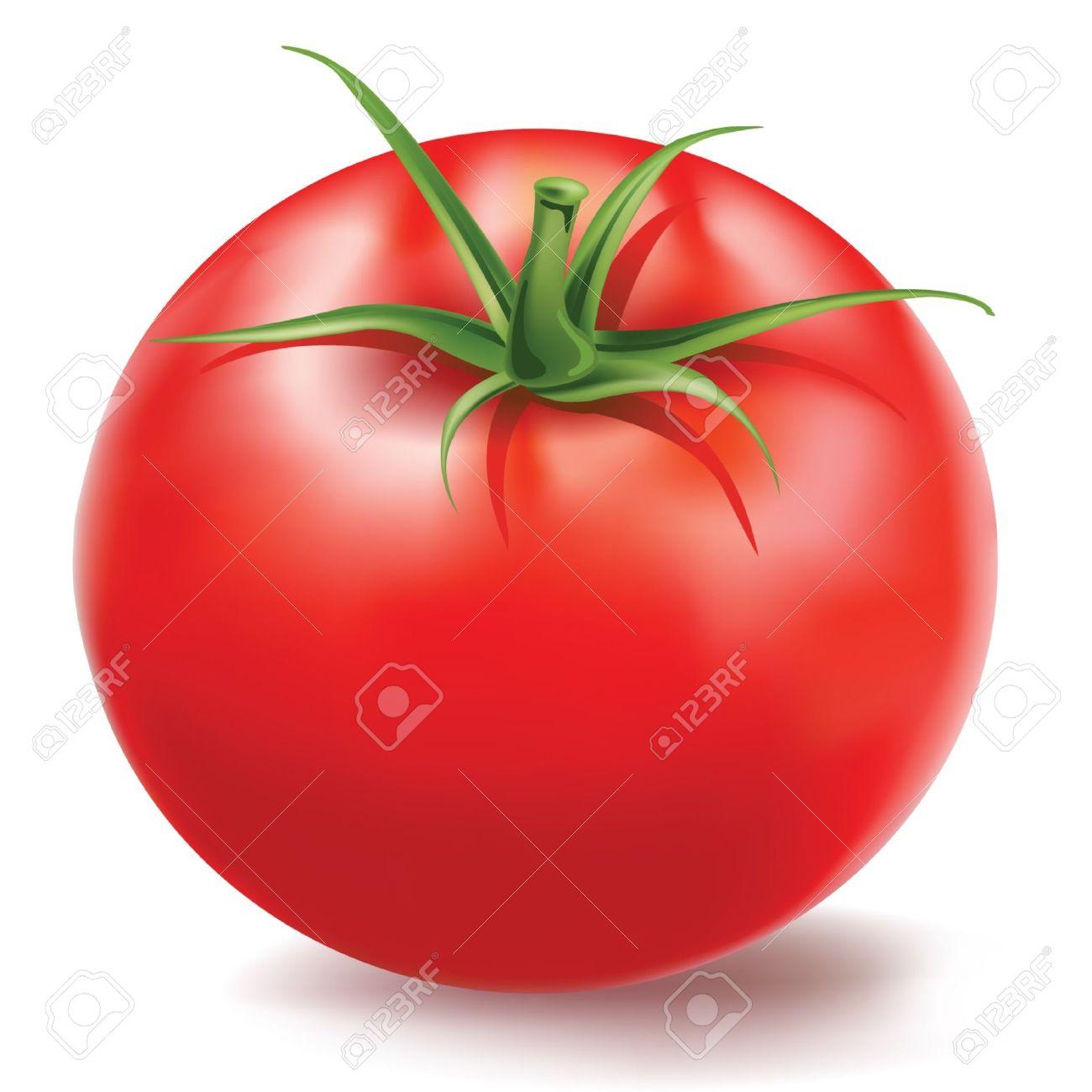 tomato Stock Vector - 10886433