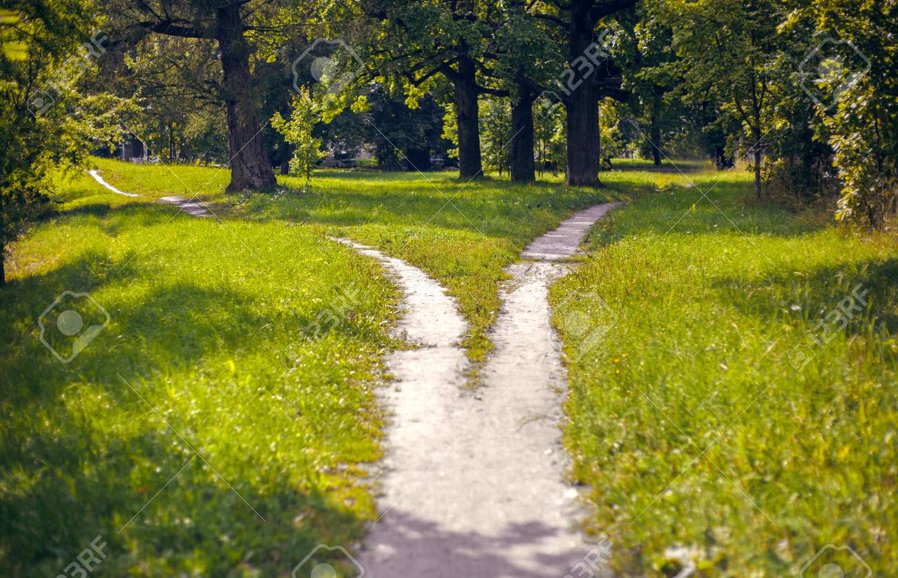 Bifurcation of a footpath in the park - 86497524