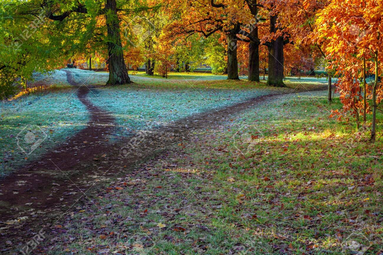 Splitting the footpath in the park in autumn - 132740492