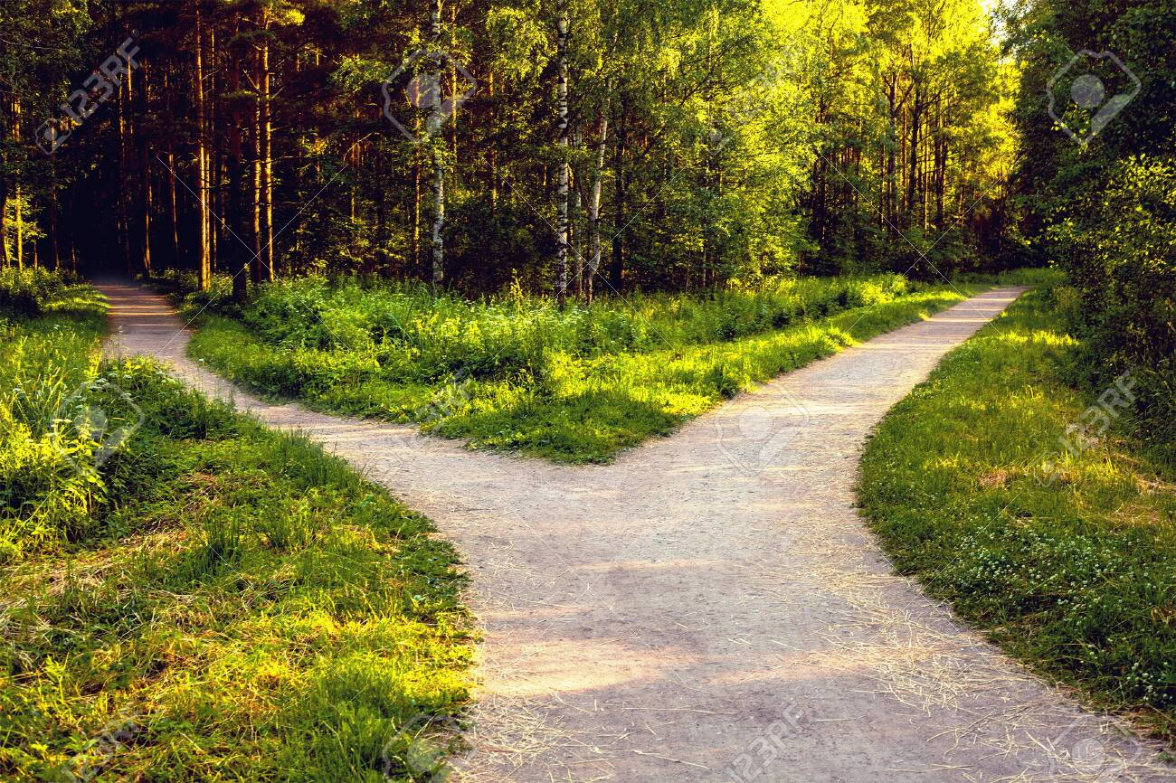 Divergence of directions. The wide path in the park is divided into two trails. - 152475485