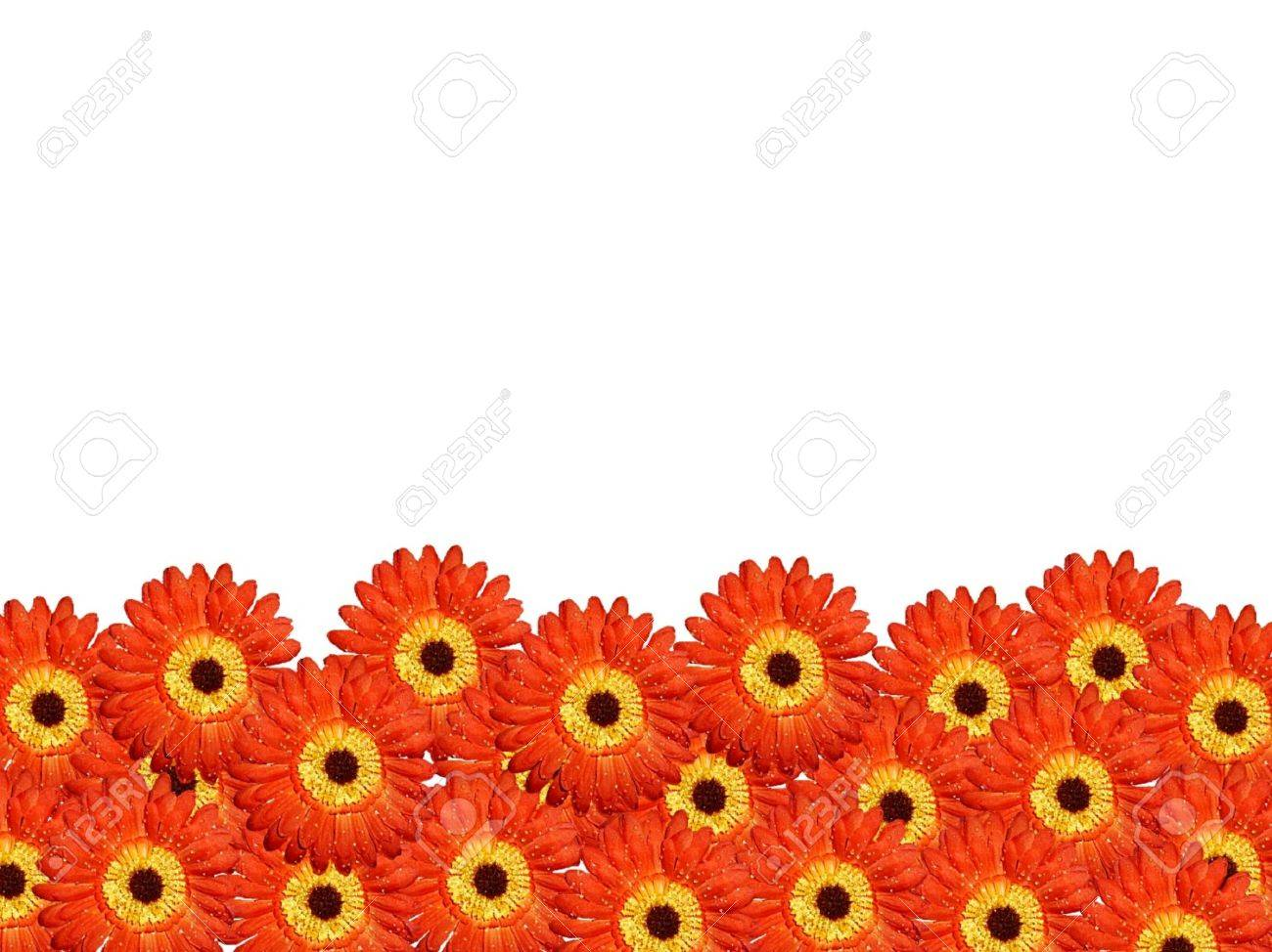 Vibrant daisy flower border stock photo picture and royalty free stock photo vibrant daisy flower border izmirmasajfo