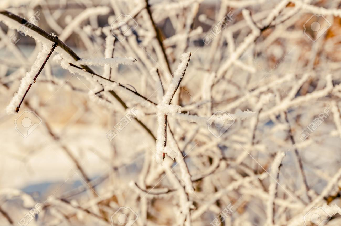 an image of winter scenery, trees covered by snow Stock Photo - 16643654