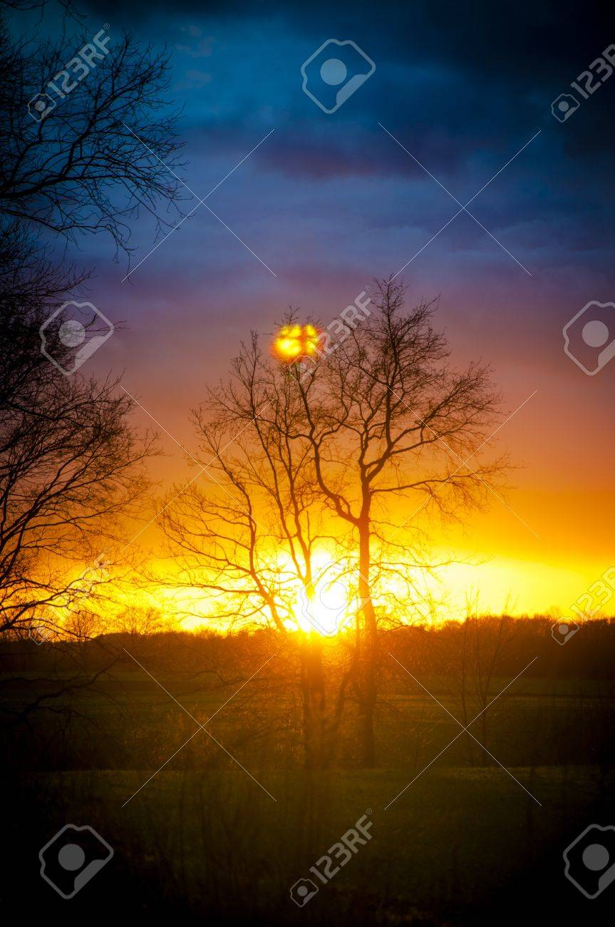 An image of tree silhouette during amazing sunset Stock Photo - 17295478
