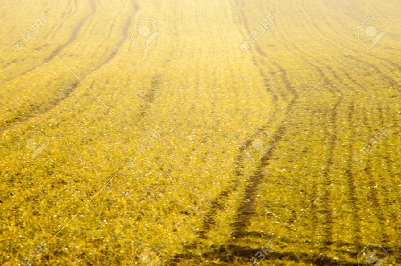 An image of cereal field Stock Photo - 18291606