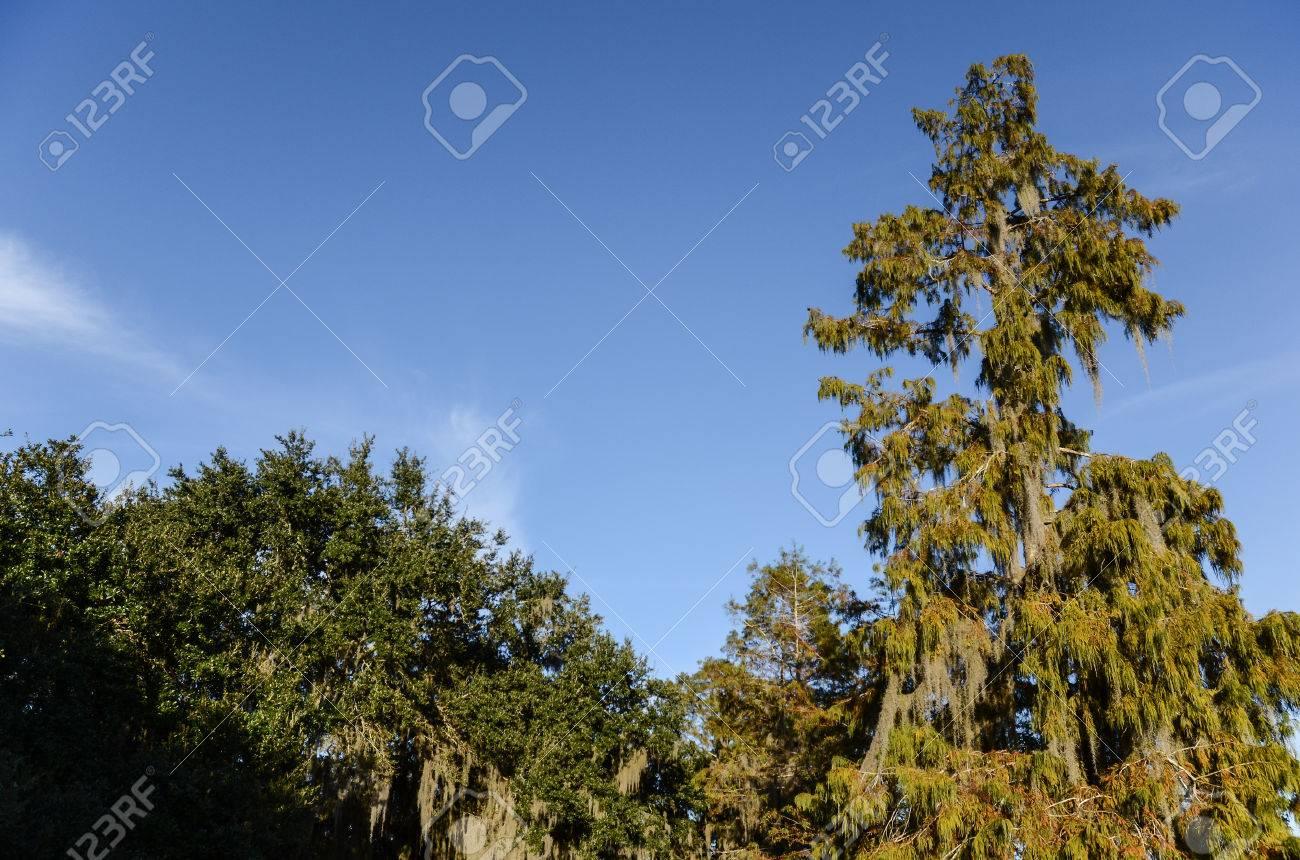 Famous Louisiana bayou swamp tour, New Orleans Stock Photo - 23650368
