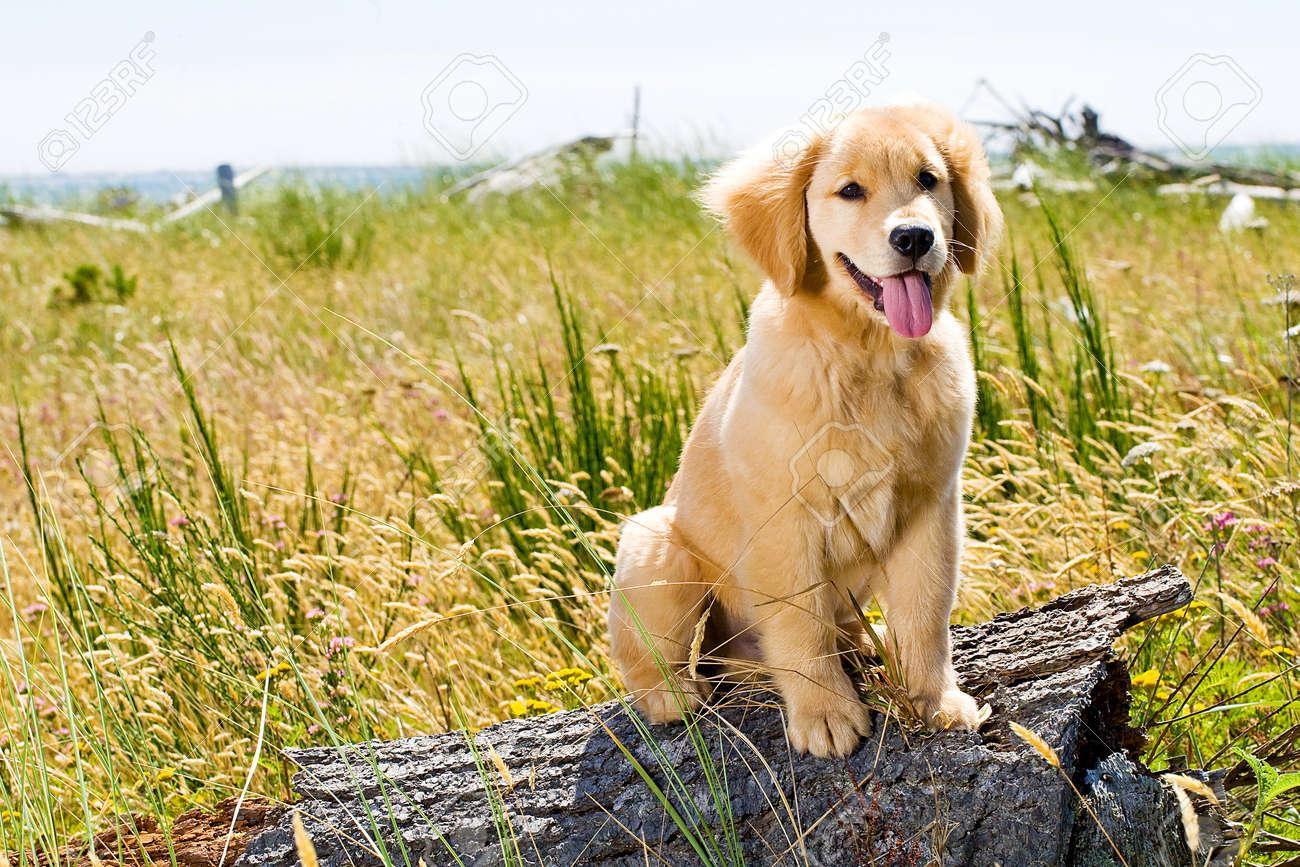 pretty dog Stock Photo - 10741234