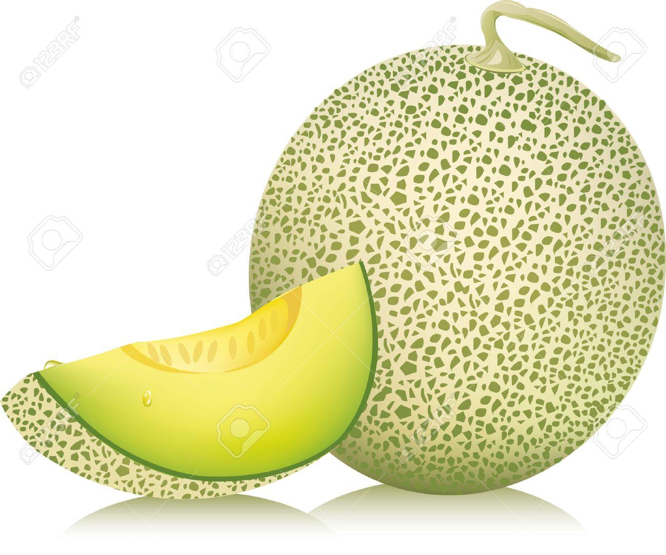 cantaloupe melon vector illustration royalty free cliparts vectors