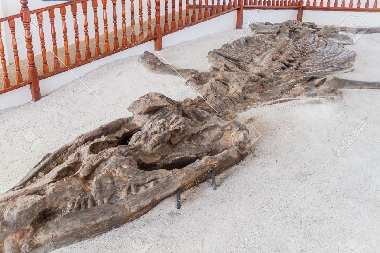 Fossilised specimen of Kronosaurus in El Fosil museum near Villa de Leyva in Colombia - 60118623