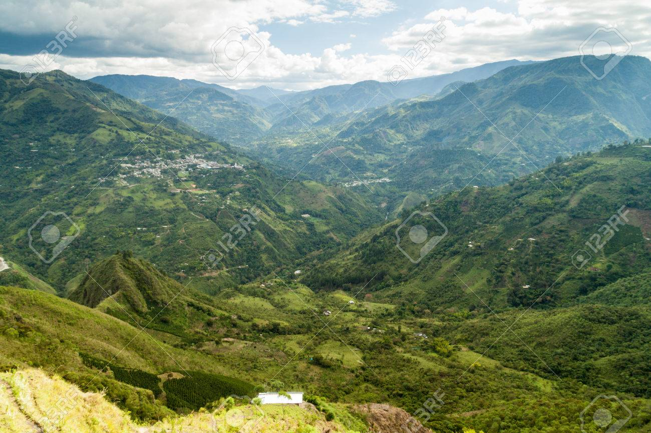 コロンビア カウカ渓谷の Ulluco...